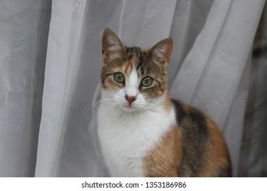 Orange and white curious cat
