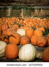 Orange and white pumpkins sitting in a pumpkin patch at Tanaka farms in Irvine, California