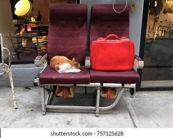 Orange and white stay cat resting on an old airplane seat next to the red suitcase on the street in Istanbul