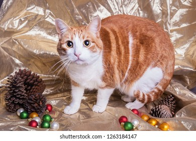 Orange and white tabby cat surprised look wide eyes on Christmas themed gold background wintery pinecones and colorful ornaments