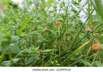 Orange wild flowers close up