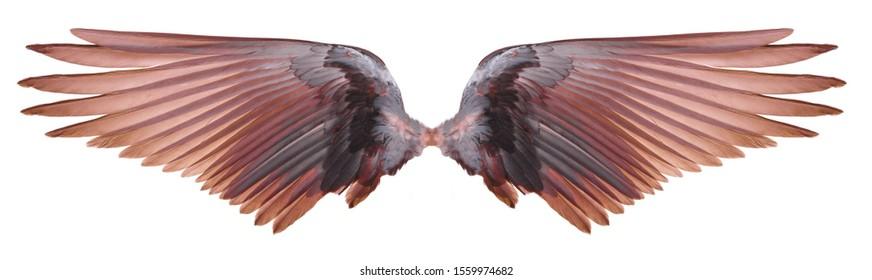 orange  wings on white background