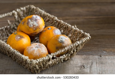 Orange wither and rot in the old basket on old wooden plate/ Select focus and still life image