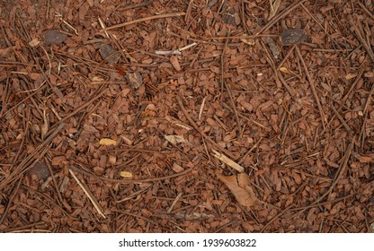 Orange wood branch and dried leaves background.