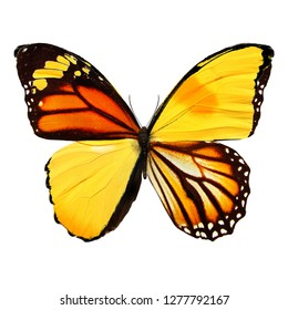 orange and yellow butterfly isolated on white background