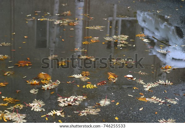Orange and yellow, fallen leaves of mountain ash in the water, a brown puddle. Autumn background