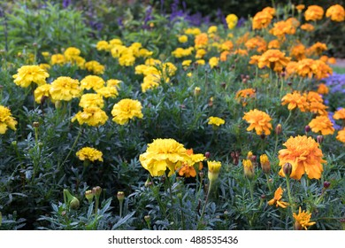 orange and yellow - flower meadow