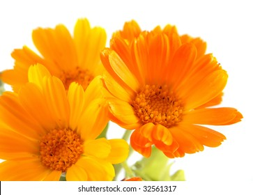 The orange and yellow flowers of calendula by large plan.