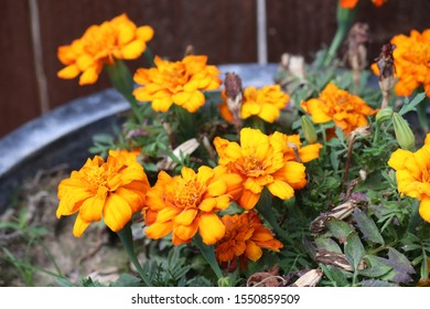 orange and yellow flowers in a pot