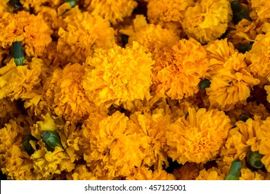 orange and yellow Marigold flowers. Close up marigold flower background. Prepare for prayer at the temple