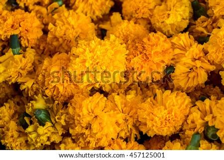 Orange yellow marigold flowers close marigold stock photo edit now orange and yellow marigold flowers close up marigold flower background prepare for prayer at mightylinksfo