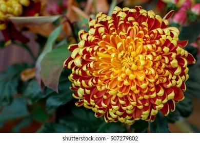 Orange, Yellow, and Red Mum Flower in a Bouquet with spiral Mandala Design