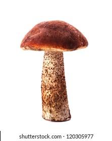 Orange-cap boletus mushroom isolated on white background