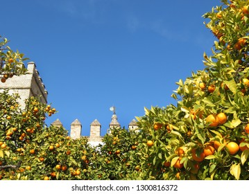 Oranges on trees in orchard, with blue skyes and turrets of a castle in the background