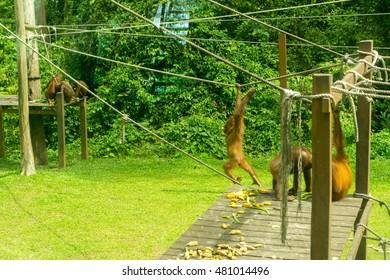 Orangutan Rehabilitation Center