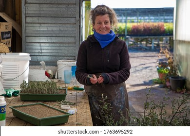 Orari, Canterbury, New Zealand, May 27 2020: a female nursery worker takes cuttings of native plants and plants them into trays to propagate and reproduce, Canterbury, New Zealand