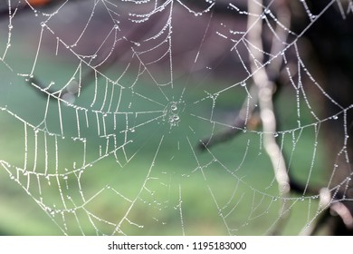 An Orb spider-web is covered in dew drops early on a foggy spring morning.