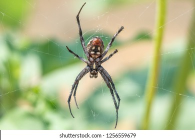 Orb weaving spider on web