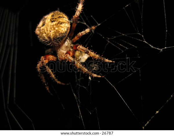 An orb-weaver spider sitting on it's web.