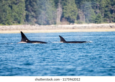 Orcas, Campbell River