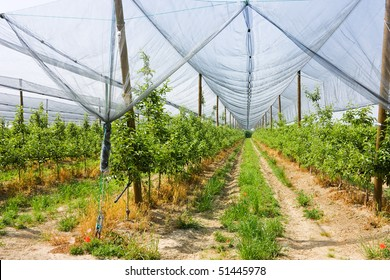 orchard sheltered with a net anti-hail, protected cultivation