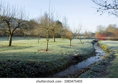 THE ORCHARD AND STREAM on a frosty winters morning UK.