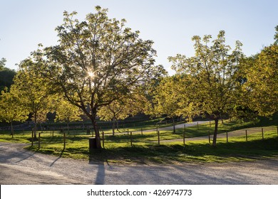 Orchard at sunset in Castelnaud-la-Chapelle.
