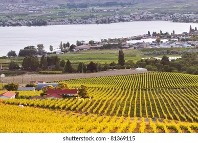 Orchards in Osoyoos Valley, BC, Canada