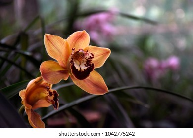 Orchid of Assam