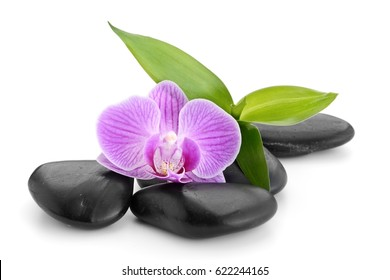 orchid and bamboo on the zen basalt stones isolated on white background