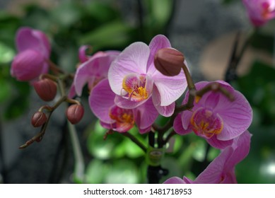 orchid blossom in full bloom