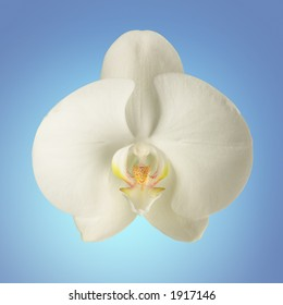 Orchid close up with clipping path.