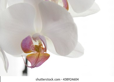 Orchid, Orchid Close up, White Orchid, Flower, Flowers, Flower Close up, Macro, Nature, Bloom, Abstract Pink, White, Yellow, Green,