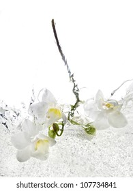 Orchid falling into water