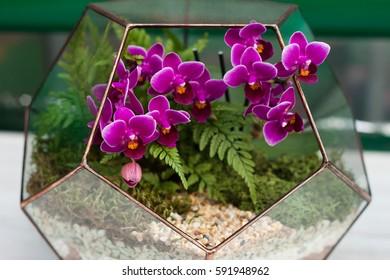 Orchid in the florarium