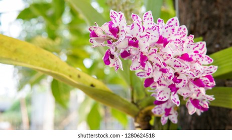 Orchid flover. Background Orchid