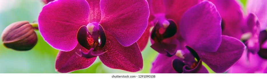Orchid flower banner in tropical garden sunset tone, Orchids Floral background spring sun day for Floral postcard.