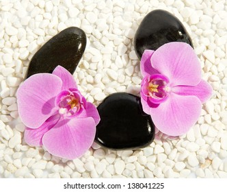 Orchid flower, big pebbles against small pebble