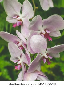 Orchid Flower Close up B, Shallow Depth of Field Nature Flora Photography