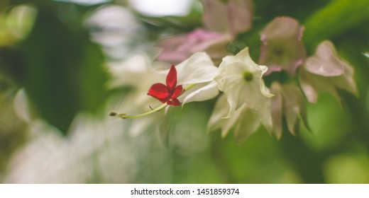 Orchid Flower Close up D, Shallow Depth of Field Nature Flora Photography