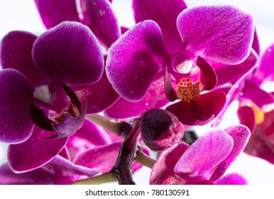Orchid flower close look - macro