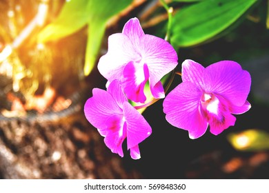 orchid flower with flare light