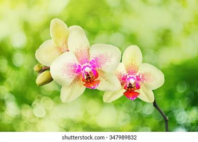 Orchid flower in a garden
