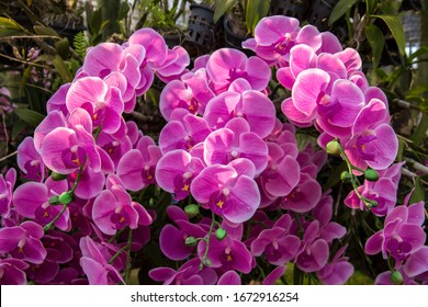 Orchid flower in orchid garden at winter or spring day. Orchid flower for postcard beauty and agriculture design. Beautiful orchid flower in garden