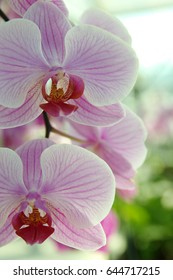 Orchid flower and green leaves background with sunlight in garden