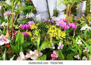 Orchid Flower in Japan