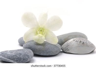 Orchid flower with nature stone