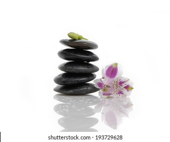 orchid flower on black stacked stones.
