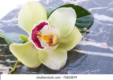 Orchid flower on marble