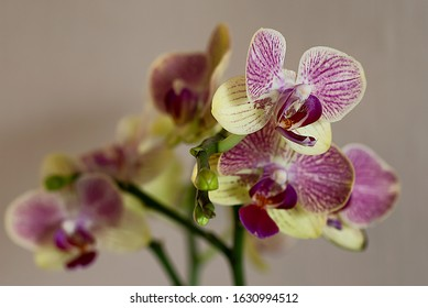 Orchid flower with shallow Depth of Field